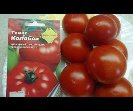 Описание сорта томата Колобок, его характеристика и урожайность 3