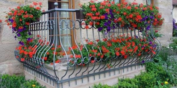 Какие цветы посадить на балконе, чтобы цвели все лето? 3