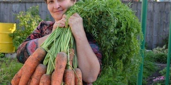 Готовы к такому урожаю? Нужно сеять морковь следующим образом 2