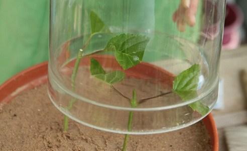 Подращивание садовых растений дома 11
