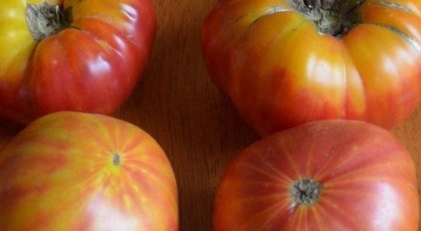 Томат Большая Радуга — описание сорта, отзывы, урожайность