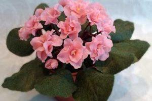 Секреты обильного цветения фиалок