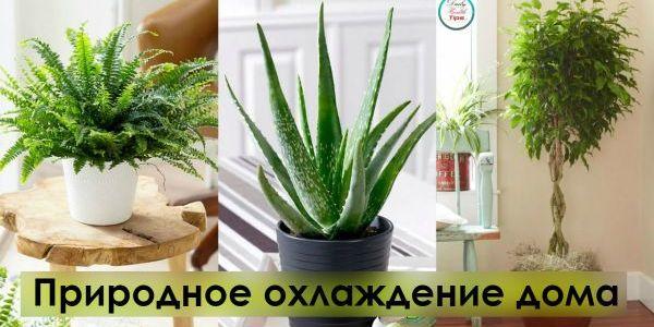 Вот 6 растений, которые помогут сохранить прохладу в доме 13