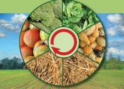 Севооборот для огорода: как с двух соток прокормить семью 6