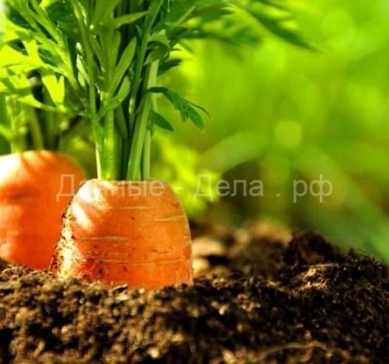 Как подготовить грядку под морковь 3