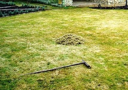 Когда следует удобрять газон после зимы? 4