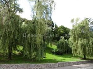 Плакучие формы деревьев в дизайне сада