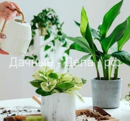 О чем пытаются вам рассказать листья комнатных растений 4