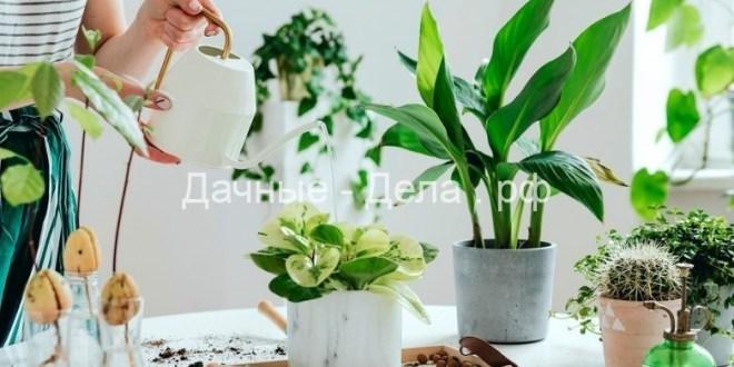 О чем пытаются вам рассказать листья комнатных растений