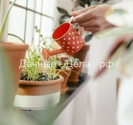 5 универсальных правил полива комнатных растений 6