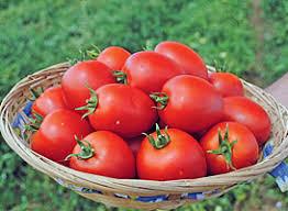 Описание сорта томата Намиб, особенности выращивания и ухода