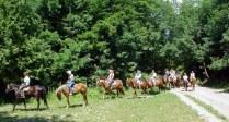 конные прогулки 6