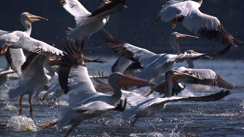 мигрирующие животные