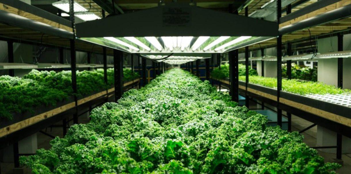 Выращивание пищи
