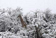 снегопад в Южной Африке