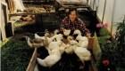 20 Жили у Веруси веселые гуси