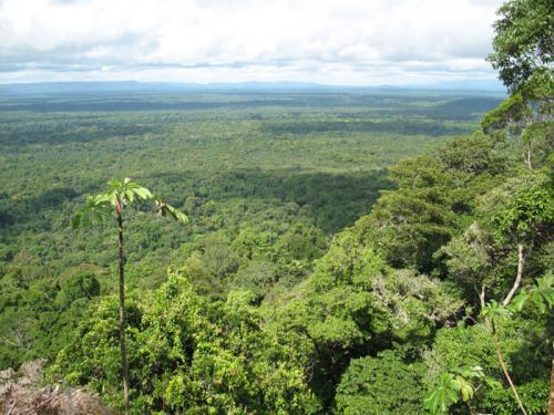 Тропический пояс государства примеры
