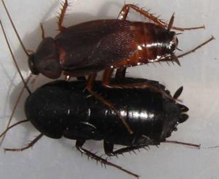Огромные тараканы в квартире как избавиться