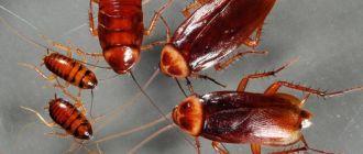 Морить тараканов в Химках в квартире