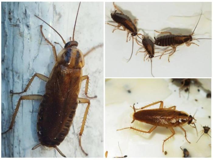 СЭС от тараканов