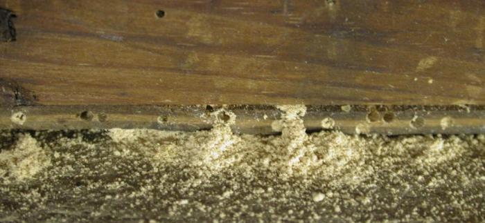 Жук древоточец как избавиться в деревянном доме