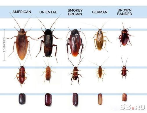 вызвать СЭС от тараканов в Жуковском