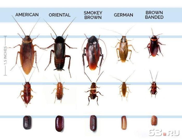 Тараканы в магазине куда обратиться, кому жаловаться и что делать