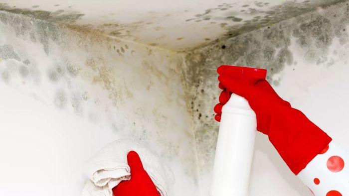 Как вывести плесень и грибок в ванной?