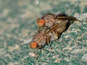 Народные средства против мух