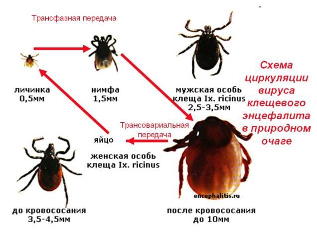 Дезинсекция от клещей на участке в Москве и Подмосковье. Цены