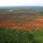 лес короед