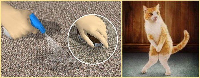 Как избавиться от запаха животных в квартире