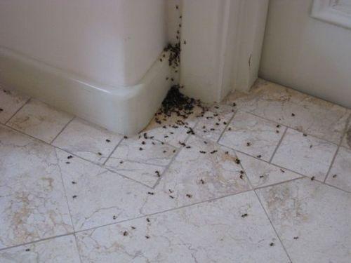 избавиться от муравьев квартире