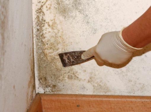 Удаление плесени в квартире, как провести, методы