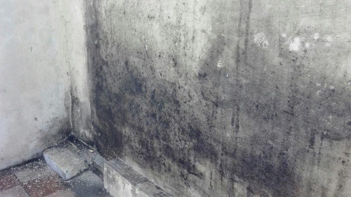 Чем можно обработать стены от плесени?