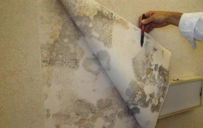 избавиться от плесени на стене в квартире