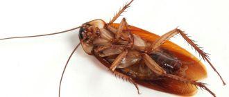 СЭС от тараканов в Раменском