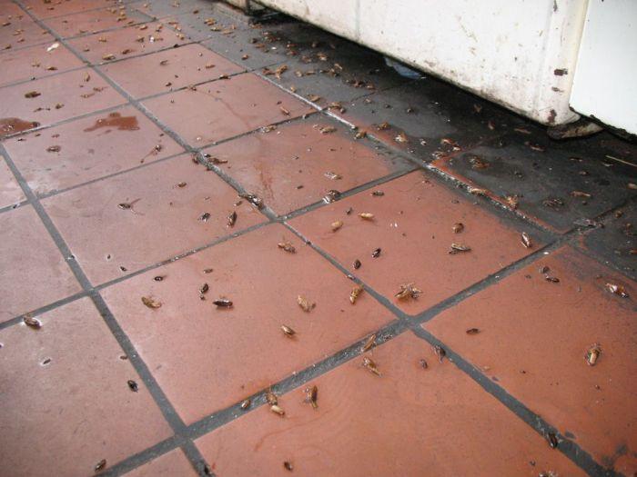 Тараканы в ресторане как избавиться