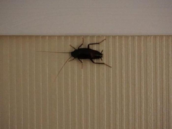 Тараканы в гостинице и отеле. Как избавиться?