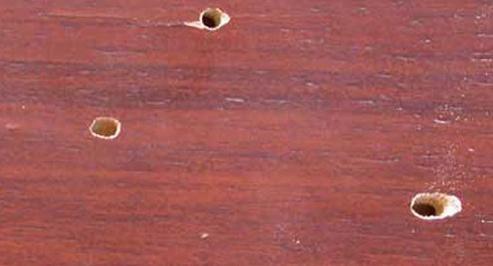 Жук точильщик в деревянном доме как избавиться
