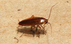 Уничтожение тараканов в Химках с гарантией
