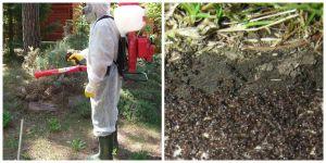 Уничтожение муравьев профессионалами