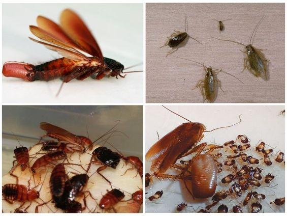 Уничтожение тараканов в Лыткарино. Цены