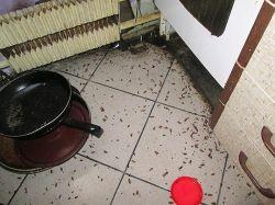 мертвые тараканы после обработки