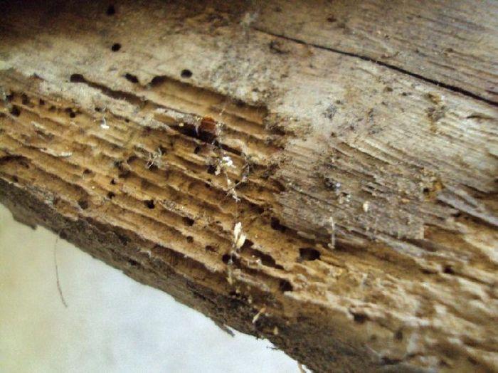 Способы и методы уничтожения жуков в деревянном доме