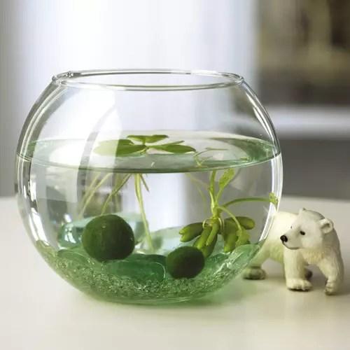 圓形水族缸