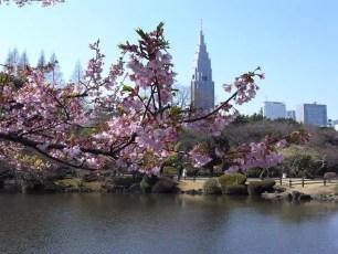東京旅遊景點-新宿御苑