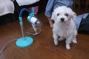 創意新商品!寵物快乾吹風機架