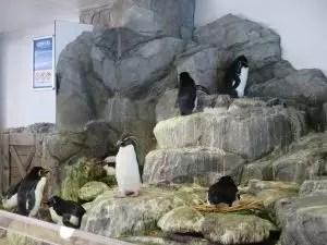 大阪旅遊實記 海遊館-27