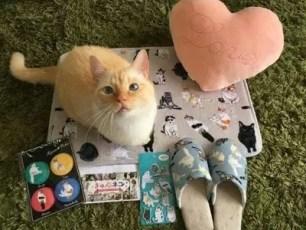 3COINS推出「怦然心動的貓咪」系列商品!將在IG上募集到的20隻可愛貓咪給商品化囉♥